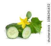 fresh  nutritious  tasty green... | Shutterstock .eps vector #1086241652