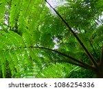 Sunlight Through Fern Branches