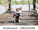 it's smile  it's happy ...   Shutterstock . vector #1086256388