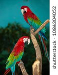 macaws on exhibit in a tree... | Shutterstock . vector #1086304052