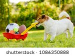 Stock photo concept of fun summer activities with dog and many sport balls 1086350888