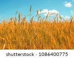 wheat field and blue sky. ripe... | Shutterstock . vector #1086400775