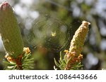 Light Green Yellow Spider On A...