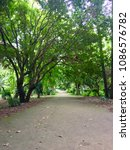 Tree Path In Botanical Test...