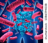 intestine bacteria and gut...