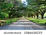 A Line Of Oak Trees At A...