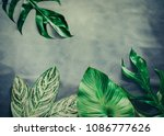 green leaves plant growing  the ... | Shutterstock . vector #1086777626