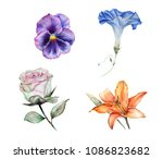 Watercolor Set Of Isolated...
