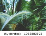 abstract blur of coconut leaf... | Shutterstock . vector #1086883928