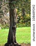 under green tree. nature... | Shutterstock . vector #108689342