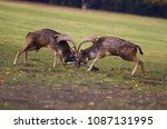 intense fighting duel between... | Shutterstock . vector #1087131995