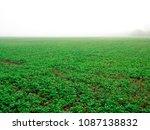 Farmer Plan A Groundcover Befo...