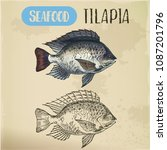 sign with tilapia or cichlid... | Shutterstock .eps vector #1087201796