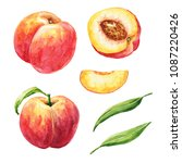 hand drawn watercolor peaches... | Shutterstock . vector #1087220426