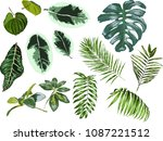 watercolor set of tropical... | Shutterstock .eps vector #1087221512