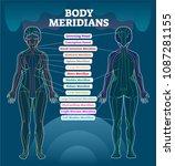 body meridian system vector... | Shutterstock .eps vector #1087281155