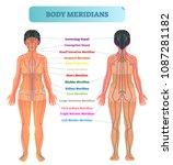 body meridian system vector... | Shutterstock .eps vector #1087281182