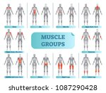 female muscle groups anatomical ... | Shutterstock .eps vector #1087290428