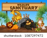 wildlife sanctuary banner and... | Shutterstock .eps vector #1087297472