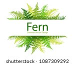 fern frond tropical leaves... | Shutterstock .eps vector #1087309292