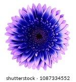 blue pink gerbera flower on a... | Shutterstock . vector #1087334552