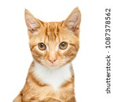 Stock photo adorable young ginger red tabby kitten portrait isolated on a white background looking just off 1087378562