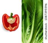 lettuce and tomato. vector... | Shutterstock .eps vector #1087395596