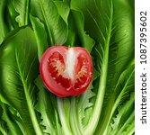 lettuce and tomato. vector... | Shutterstock .eps vector #1087395602