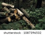 Logs In The Forest. Photo. Wild ...
