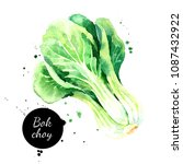 watercolor hand drawn bok choy...   Shutterstock . vector #1087432922