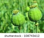 Opium Poppy  Field Out Of Focu...