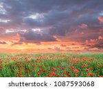 sunrise and poppies flowers... | Shutterstock . vector #1087593068