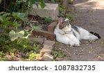 Cat Sleeping In The Garden In...