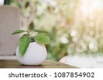 small plant in a pot displayed... | Shutterstock . vector #1087854902