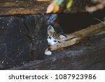 Cute Baby Kitten Hiding Behind...