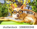 Stock photo podenco dog reading his favorite book surrounded by green plants relaxing and sitting on a 1088000348