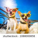 couple of dogs  with sunglasses ... | Shutterstock . vector #1088000858