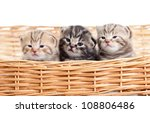 Adorable Small Kittens In...