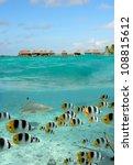 a blacktip reef shark chasing...   Shutterstock . vector #108815612