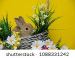 cute rabbit with flowers on the ...   Shutterstock . vector #1088331242