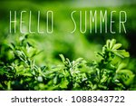 green field. part of meadow ... | Shutterstock . vector #1088343722