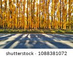 autumn leaves with yellow color ... | Shutterstock . vector #1088381072