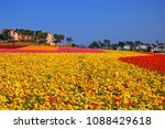 Rows Of Vivid Colors Are...