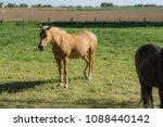 Blond Horse Pastures A Horse - Fine Art prints