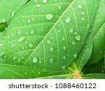 water drops on lemon green. | Shutterstock . vector #1088460122