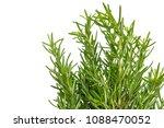fresh thyme herb. fresh organic ... | Shutterstock . vector #1088470052