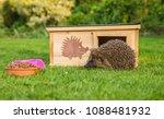 native  wild hedgehog with... | Shutterstock . vector #1088481932