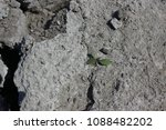 plants start colonizing dry... | Shutterstock . vector #1088482202