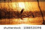 Blue Heron Fishing At Sunset I...