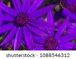 vibrant and colorful blue... | Shutterstock . vector #1088546312